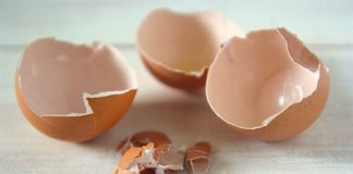 công dụng của vỏ trứng
